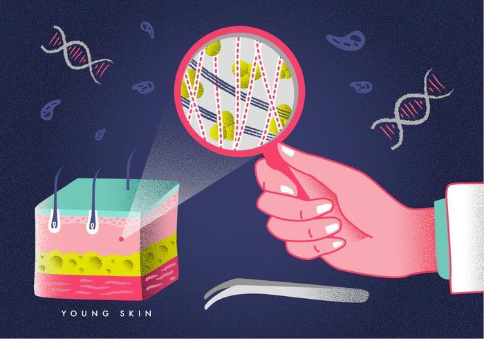 Couche cutanée dermatologie éducation illustration vectorielle
