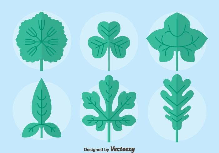 Flat Ivy Leaf Collection Vector