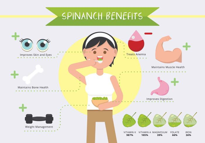 Spinach Benefits Infographic Vector