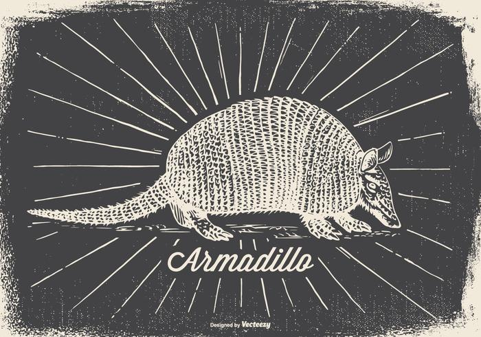 Vintage Style Armadillo Illustration