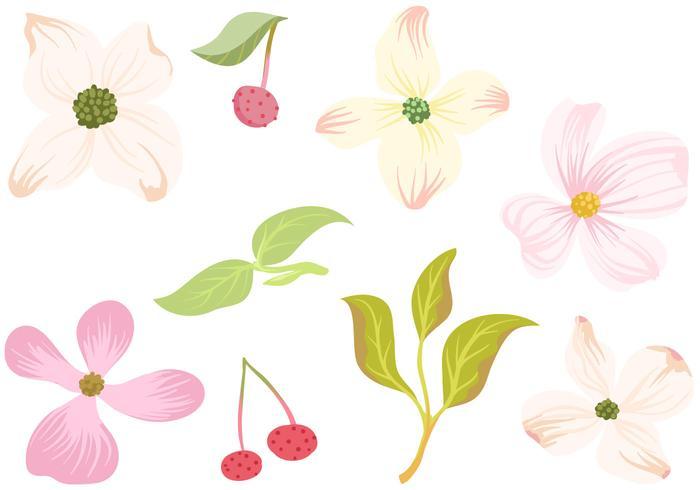 Free Dogwood Flowers Leaves Vectors