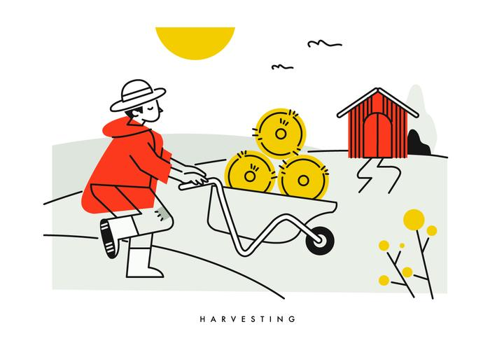 Peasant Harvesting Rice Vector Illustration