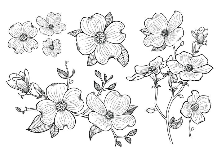 Hand Drawn Dogwood Flowers