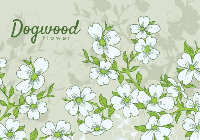 Mano libre dibujado flores Dogwood
