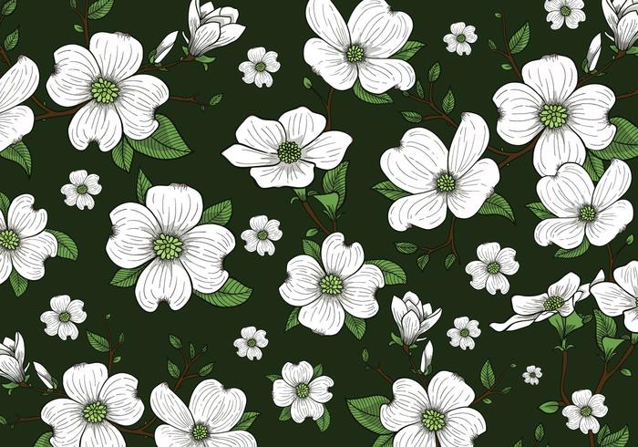 Dogwood Flowers Background Wallpaper