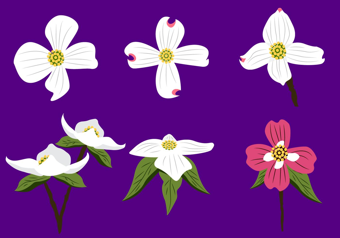 Beautiful Dogwood Flower Vector Download Free Vector Art