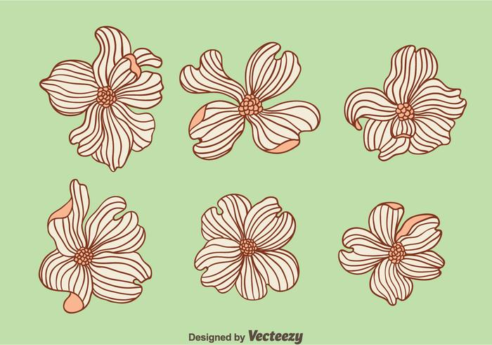 Hand Drawn Dogwood Flowers Vector