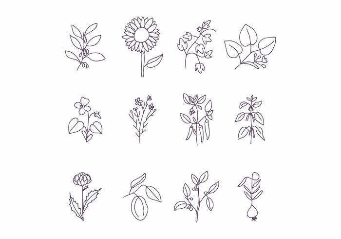 Conjunto De Flores Hermosas