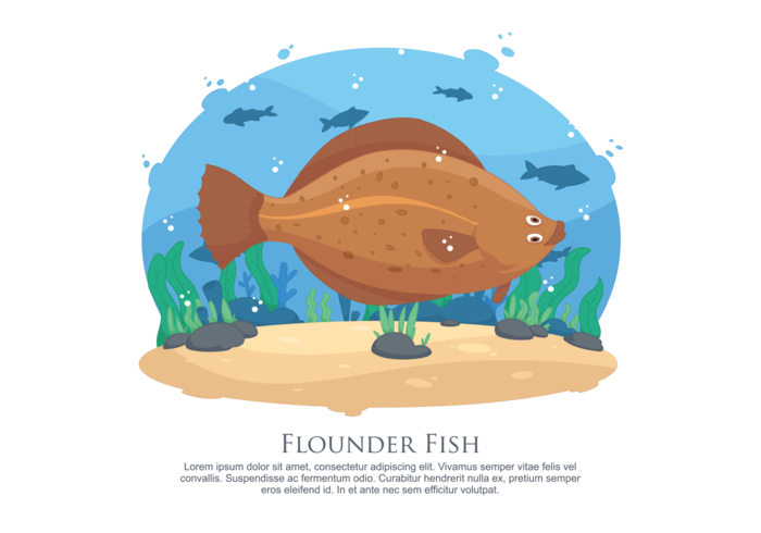 Floder fisk vektor illustration