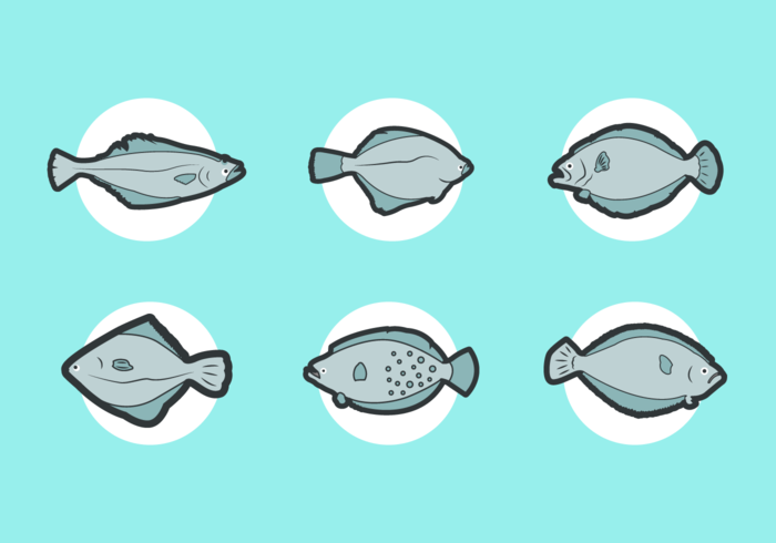 Flounder Free Vector Pack