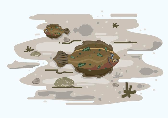Flounder and Habitat illustration