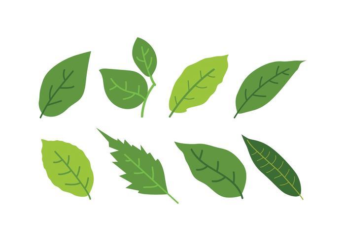 Conjunto de ícones de folhas