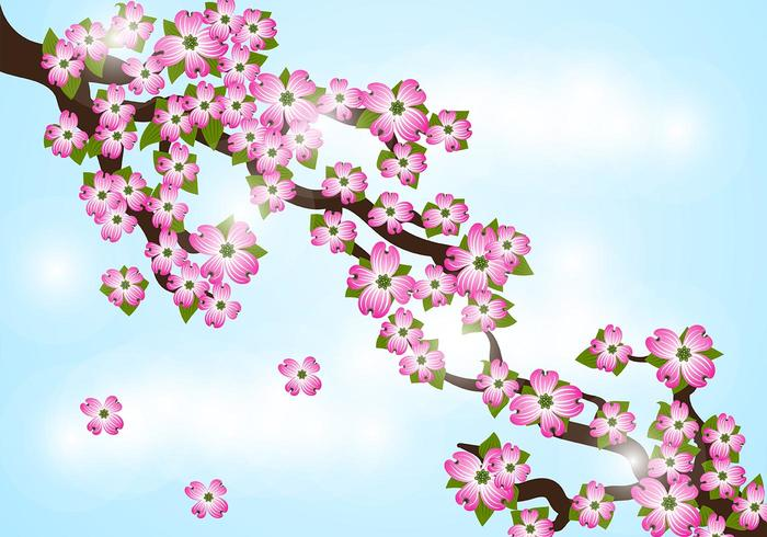 Dogwood bloem achtergrond vector