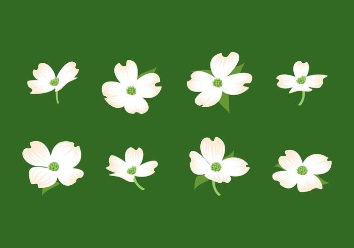 Dogwood Flower Free Vector