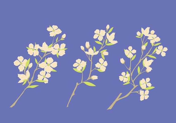 Set of Dogwood Flowers on Blue Background