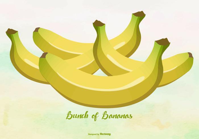 Illustration de bananes jaunes / plantain