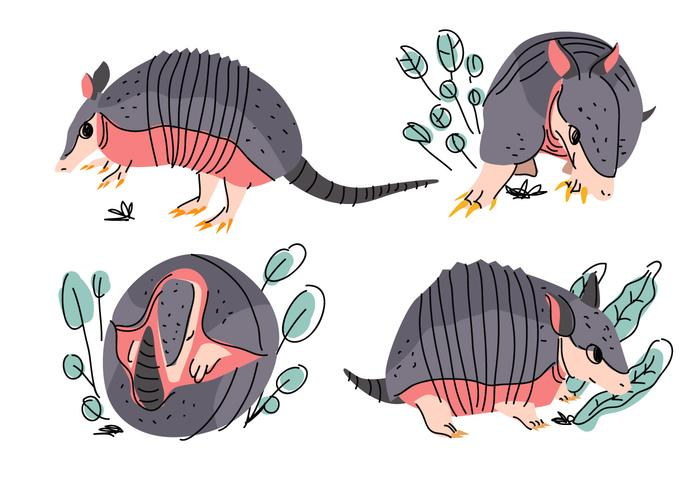 Armadillo Pose Character Cartoon Doodle Vector Illustration