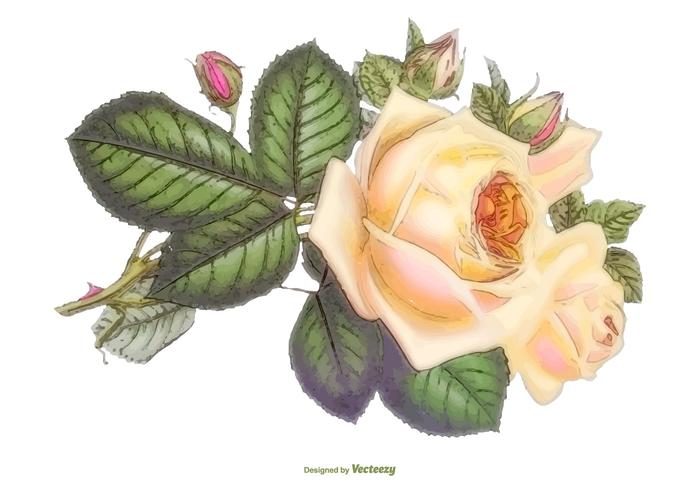 Beautiful Watercolor Vector Rose Illustration