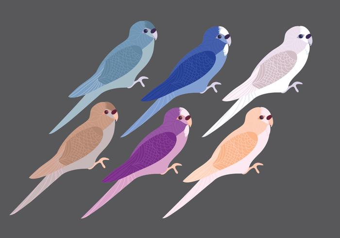 Vector bunte Budgies
