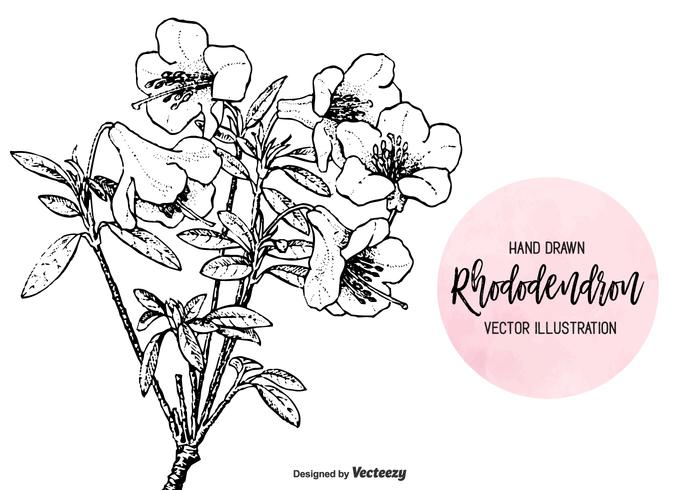 Engraved Hand Drawn Rhododendron Vector