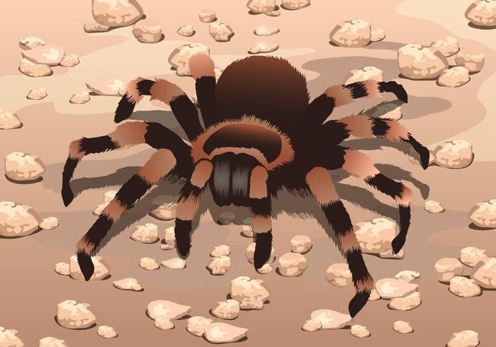 Tarantula on Gravel Vector