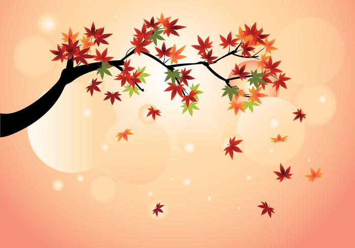 Smooth Japanese Maple with Fall Maple Leaves Vector