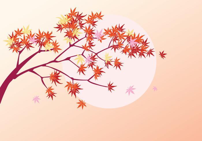 Plante d'érable japonaise lisse avec fond de soleil et feuilles d'érable