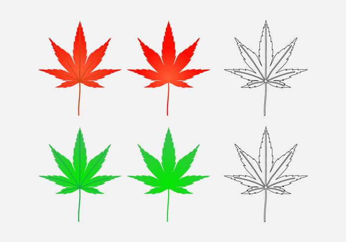 Japanese Maple Leaf Vectors