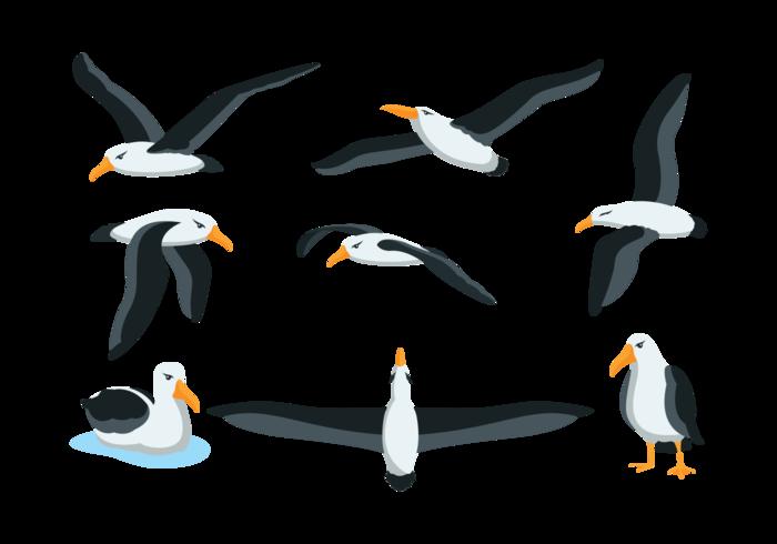 Vector Albatros