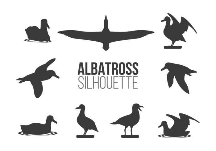 Vector Albatros Sillhaouttes