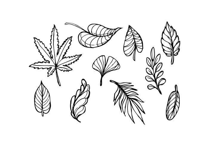 Leaf Sketch Icon Vector