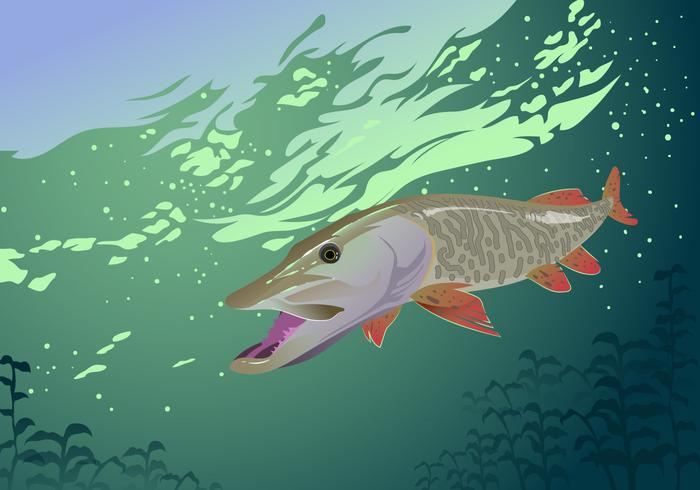 Muskie Fish Vector