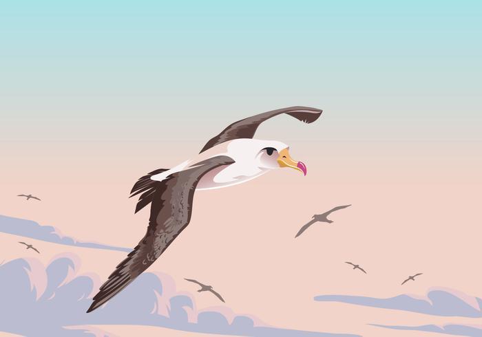 Flying Albatross Bird Vector