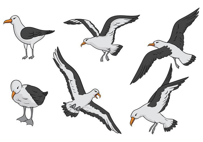 Albatros Vector Pictogrammen