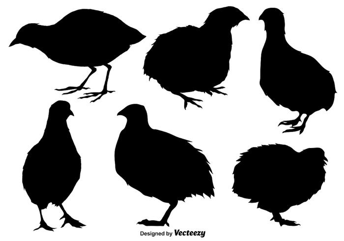 Vector Set Of Quail Flat Icons/Silhouettes