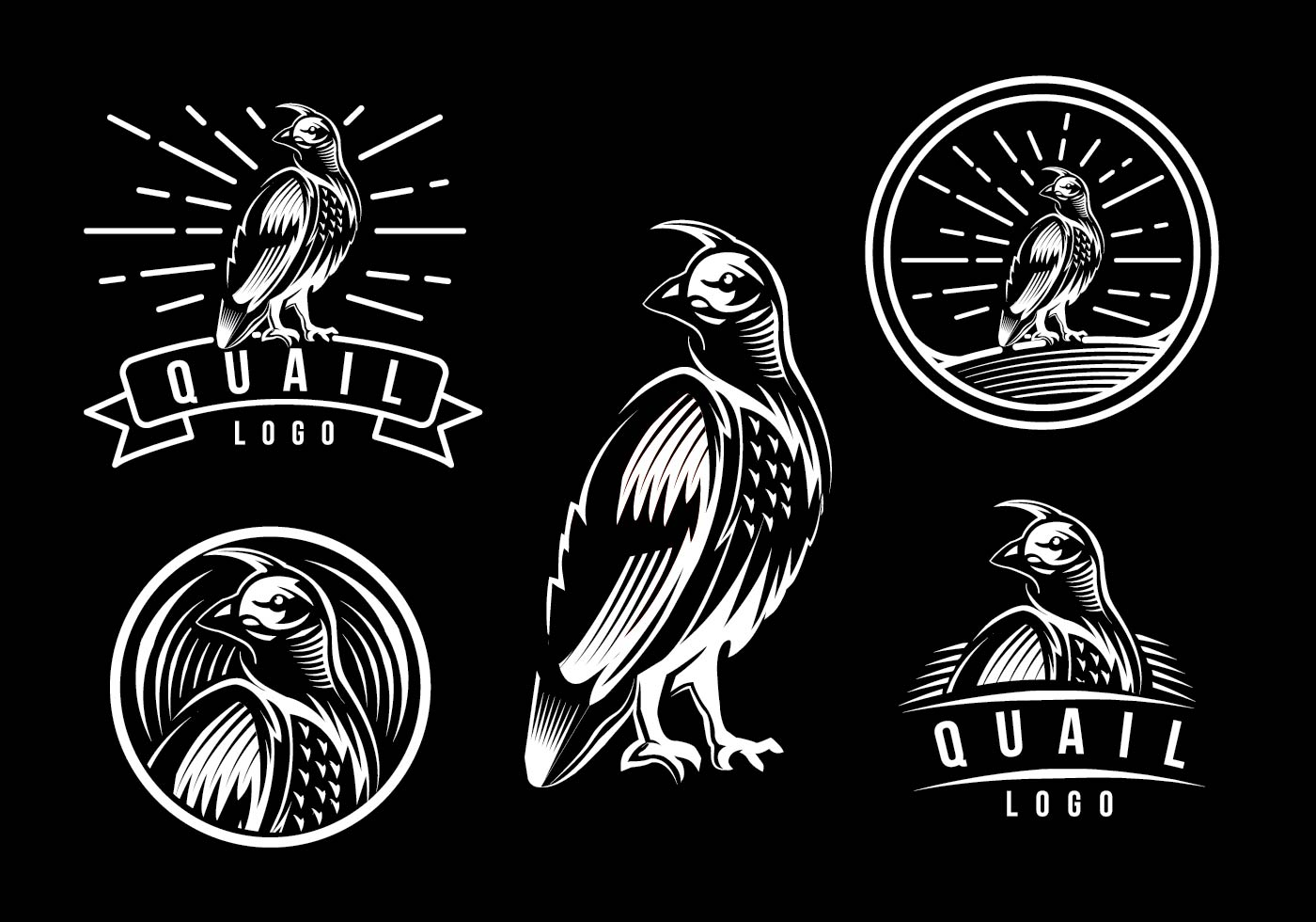 quail logo template download free vector art stock