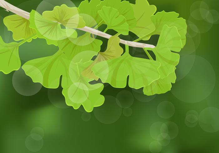 Ginkgo Leaves Background