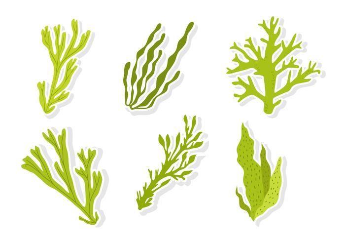 groene zee weed vectoren