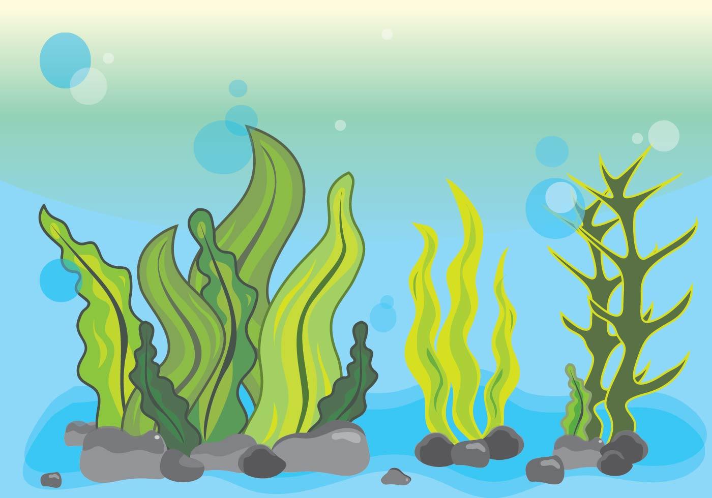 Cartoon Seaweed Clipart Seaweed Underwater Fre...