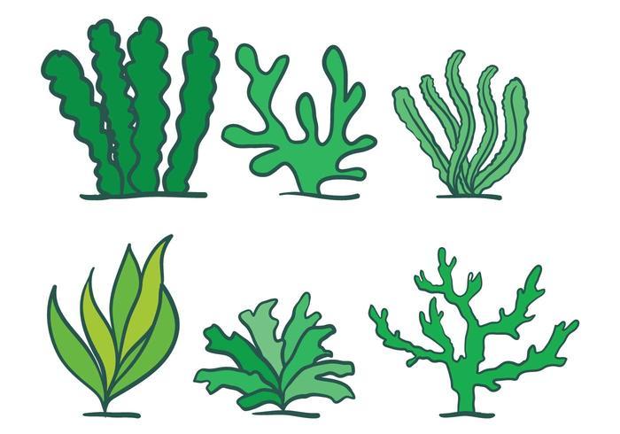 Seaweed vector set