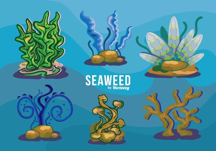 Seaweed Variation Set Underwater