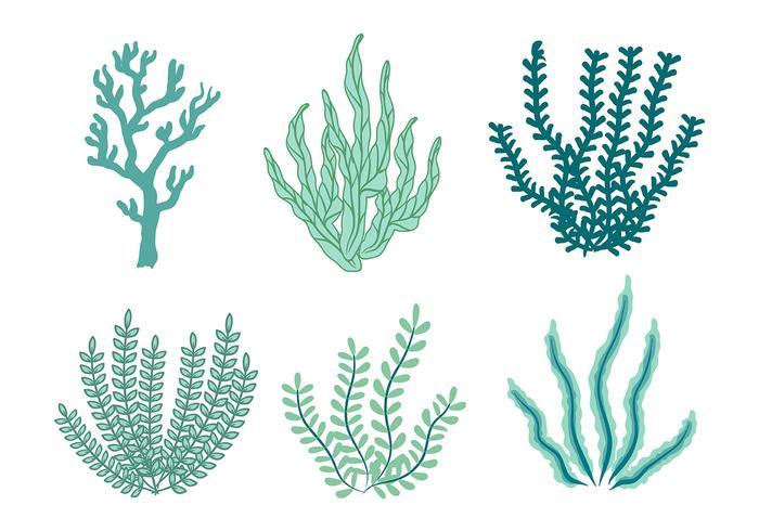 Sea Weed Vector Icon