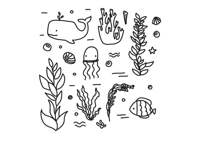 Fauna And Flora Of The Ocean Vectors