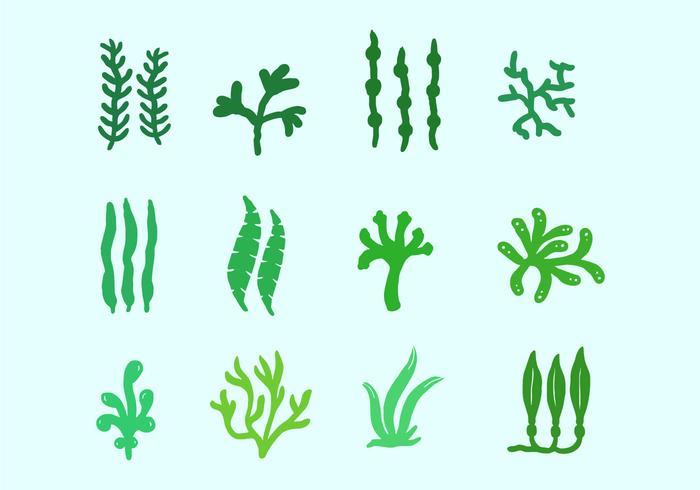 Seepflanzen und Algen