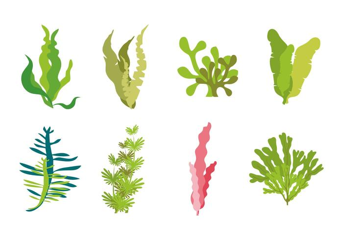 Seaweed Icons Vector
