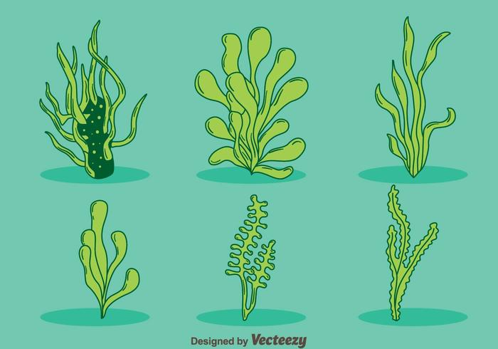 Hand Drawn Green Sea Weed Vector