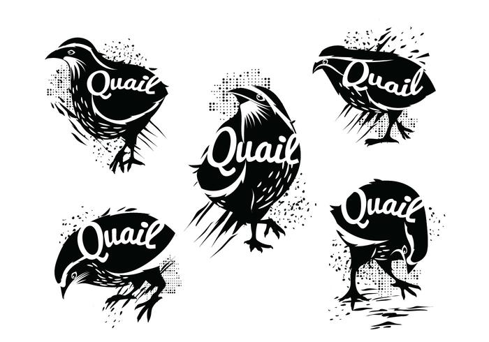 Illustration of Silhouette of Standing Common Quail with Grunge Style