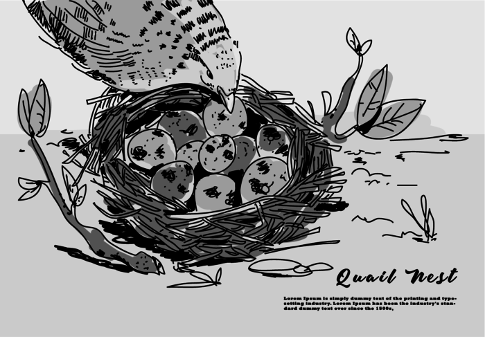 Quail Egg On Nest Hand Drawn Vector Illustration