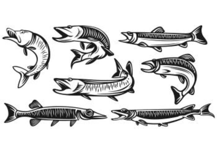 Conjunto de vetores de peixe de muskie