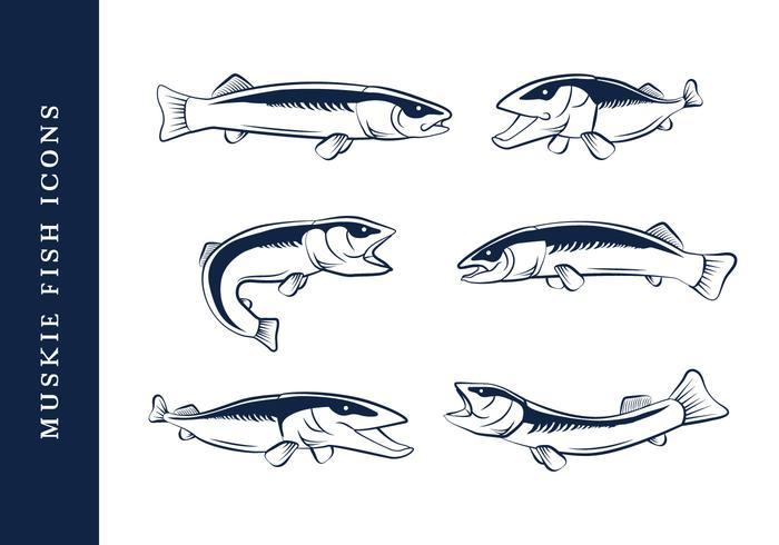 Muskie Fish Vecor